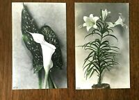 TINTED REAL PHOTO LOT OF 2,different FLOWERS, Spotted Calla & Easter Lily