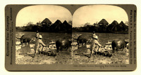 Phillippines Manila Rice Farmers Farming Carabao Antique Stereoview Card