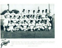 1966 FRESNO GIANTS PCL TEAM  8x10 PHOTO SAN FRANCISCO BASEBALL BOBBY BONDS
