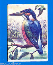 ANIMALI - Lampo 1964 - Figurina-Sticker n. 207 - MARTIN PESCATORE -New