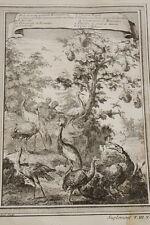 GRAVURE AFRIQUE OISEAUX AIGRETTE NUMIDIE PINTADE DE GUINEE CYGNE 1747