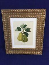 Beautiful Framed Print Williams' Bon Chretien Pear