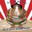 Animal Do It Your Way Birthday Card Guinea Pig red by Crazy Crew