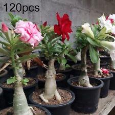 IG_ 120Pcs Mixed Adenium Desert Rose Flower Seeds Perennials Garden Balcony Plan