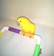 """Bath / Shower and Travel Perch 3/4"""" pvc.- Keep your birdie safe and happy!"""
