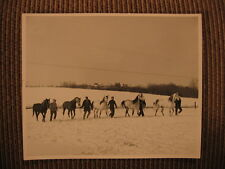 "Arabian ""Zibnar"" ""Hajababa"" ""Fa Daarl"" ""Gairloch"" of Keller Electric Horse Photo"