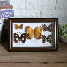 Exquisite Butterflies Insect Specimen Craft Birthday Gift Home Decoration Orname
