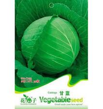Cabbage Seed Brassica Oleracea Organic Vegetable ~1 Pack 50 Seeds~