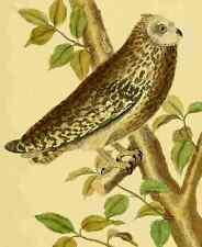 A4 Foto Martinet F 1765 Con Dibujo De Búho 1 impreso Poster