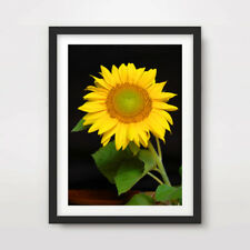 Yellow Sunflower FLOWERS FLORAL PHOTOGRAPHY ART PRINT Poster Room Wall Picture
