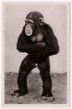 HAMBURG Hagenbeck's Tierpark Zoo Affe Schimpanse Chimpanzee * Foto-AK um 1930