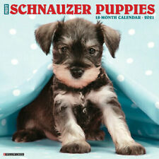 Just Schnauzer Puppies (dog breed calendar) 2021 Wall Calendar (Free Shipping)