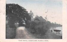 Waseca Minnesota~Cows Wading in Clear Lake~Dirt Rd (E Drive) 1908 Filzen/New Ulm