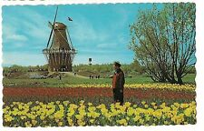 De Zwaan THE SWAN WINDMILL Tulips Mill HOLLAND MICHIGAN MI Postcard Flour Grind
