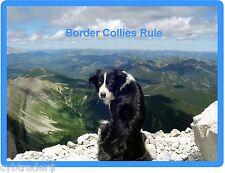 Border Collie Dog Scene Refrigerator / Tool Box Magnet