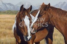 Making Friends by Terry Isaac Art Print Horse Cowboy Ranch Western Poster 11x14