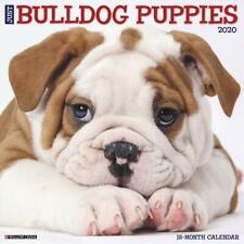 BULLDOG PUPPIES - 2020 WALL CALENDAR - BRAND NEW - 205606