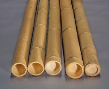 Bambusrohr Moso 100cm gelb Durch. 5,8 bis 7cm, gebleicht - Bambusrohre, Bambus