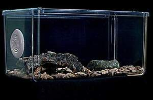 Tarantula Tank,Vivarium,Cage Enclosure Insect Cage,Invertebrate Tank