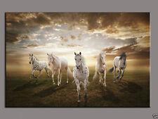 Modern Wall Art Decor handmade oil painting five Horse on Canvas (No framed)