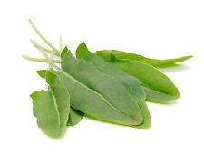 10,000 Large Broad Leaf Garden Sorrel Seeds Wholesale Spinach Dock Lettuce 10g