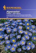 Alpenaster Hellblau Steingarten  Samen Schnitt  Blumen Stauden Sämereien