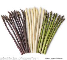 Spargel purple + grün + weiß 46 Samen gesunde Delikatesse Kultur für 10-20 Jahre