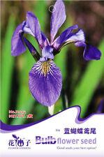 Original Package 5 Iris Seeds Iris Tectorum Maxim Aquatic Herb Plant Hot H002