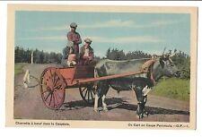 Vintage Postcard Gaspe Peninsula P.Q. Quebec Ox Cart