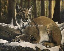 "Lynx in the Wild Scratchboard Original 11""x14""x1/8 Ampersand by Lvz"