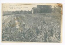 W.F. Bole's Dahlia Farm—Ada MI Antique Farm Advertising—Kent County 1910s