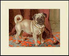 PUG LITTLE DOG AND BALL LOVELY PRINT MOUNTED READY TO FRAME