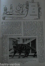 Cat Show Champions Cats Antique Article 1898 Tabby Siamese Chinchilla Louis Wain
