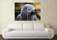 Large African Grey 2 Parrot Wild Bird Pet Wildlife Wall Poster Art Picture Print