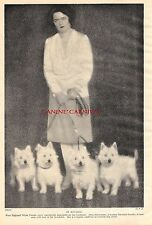 4 WESTIE WEST HIGHLAND TERRIER DOGS  BAVARIA 1934 VINTAGE DOG PHOTO PRINT