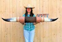 "STEER LONG HORNS MOUNTED 4' 9"" COW BULL SKULL TAXIDERMY LONGHORN LH2479"