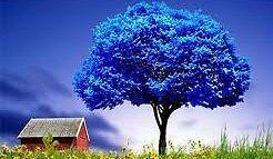 Blue Tree Accessories