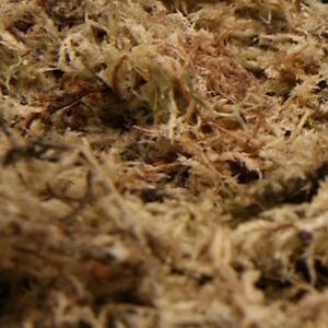 1 kg Sphagnum Moos Moss Terrarienmoos Pflanzenmoos Dekomoos Spaghnum Terrarium