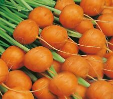 "CARROT ""PARIS MARKET"" 300+  SEEDS HEIRLOOM FAST AND EASY TO GROW SUITABLE 4 POTS"