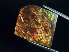 Ammolit / Ammolith 22,17 Ct feiner Cabochon 24mm (629m)