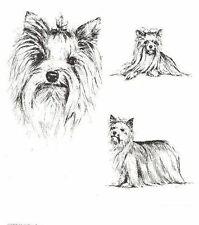 Yorkshire Terrier - 1963 Vintage Dog Print - Matted *