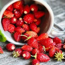 Wild Strawberry Seeds Cinderella red strawberries Ukraine 0.3 g