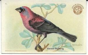 Varied Bunting #4  Arm & Hammer Birds of America  3rd Series 1922