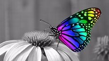 Rainbow Butterfly Wall Art High Quality Canvas wall arts home decor