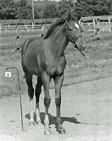 SECRETARIAT BABY BELMONT STAKES WINNER 8X10 GLOSSY PHOTO PICTURE