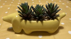 Artificial Succulent In Yellow Sausage Dog Pot