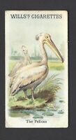 WILLS - ANIMALS & BIRDS - THE PELICAN