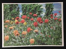 Regula Dettwiler, Rosen mit Pappeln im Hintergrund, Farboffset, 1998, handsign.