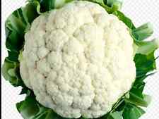 "Cauliflower Seeds ""Snowball"" ( Approx 200 Seeds) Very Popular Variety"