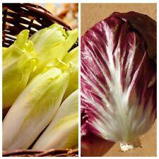 Seeds Chicory Vitloof Palla Rossa Lettuce Vegetable Organic Heirloom Russian